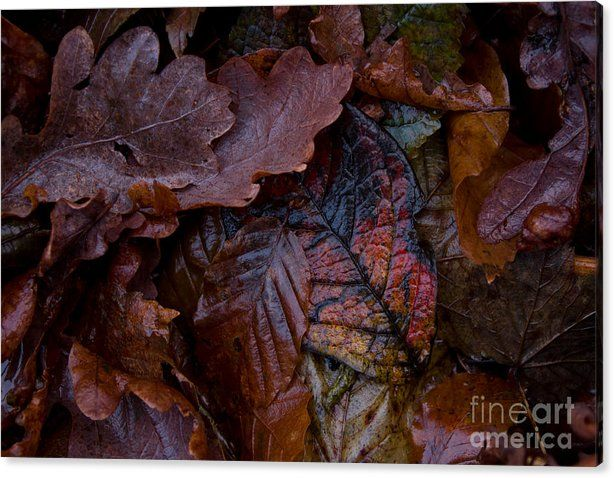 Buy a 36.00 x 24.00 stretched canvas print of Sverre Andreas Fekjan's Autumn ground for $99.00.  Only 7 prints remaining.  Offer expires on 08/02/2016.