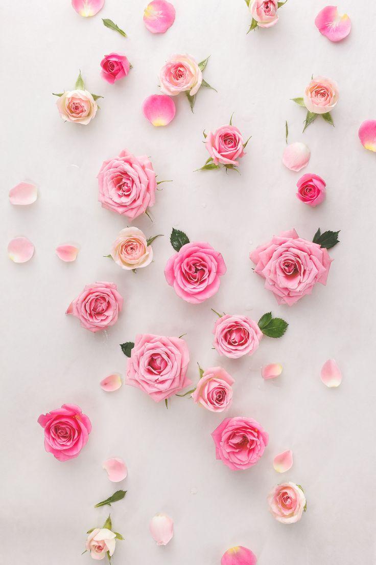 Gambar Bunga Untuk Wallpaper Whatsapp Pernik Wallpaper