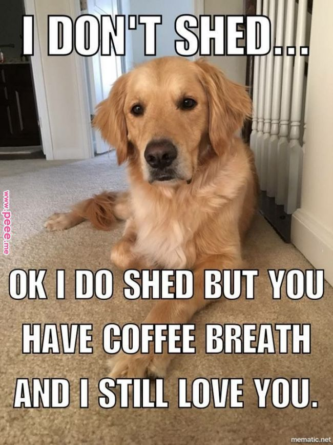 Pin by Veronica Warren on Funny quotes | Funny animals, Cute funny ... #coffeeBreath