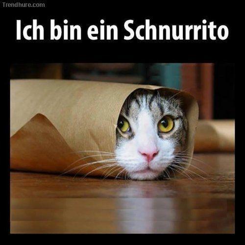 Schnurrito   – Tiere – humorvoll