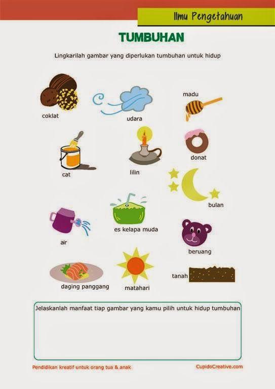394 Best Marano Gomez Scott Talerico Coleman Cameron: 394 Best Images About Bahasa Indonesia On Pinterest
