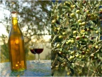 Olivenöl selbst pressen