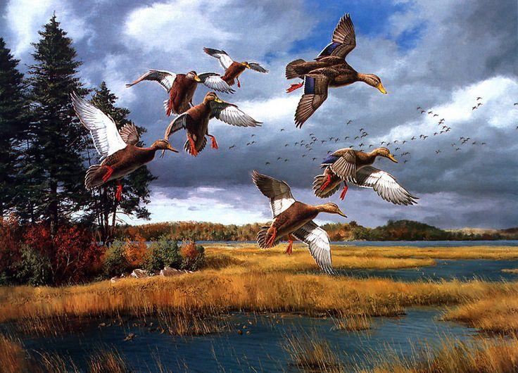 Water Iphone Wallpaper David Maass Jesien W Malarstwie Pinterest Wildlife Art