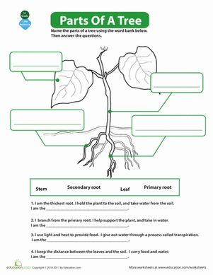 the parts of a tree 5th grade biology science worksheets worksheets worksheets for kids. Black Bedroom Furniture Sets. Home Design Ideas