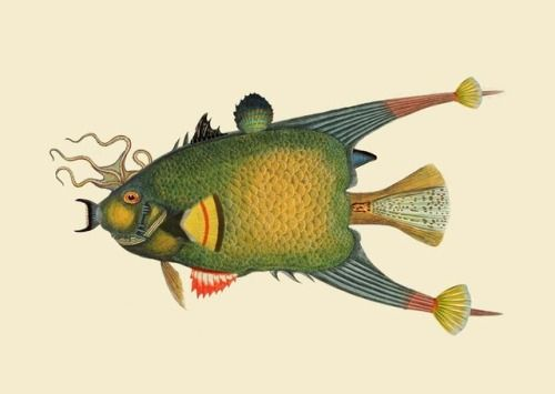 Infertile fishes: Chordata Paralichthys (collage)  2017  art prints >