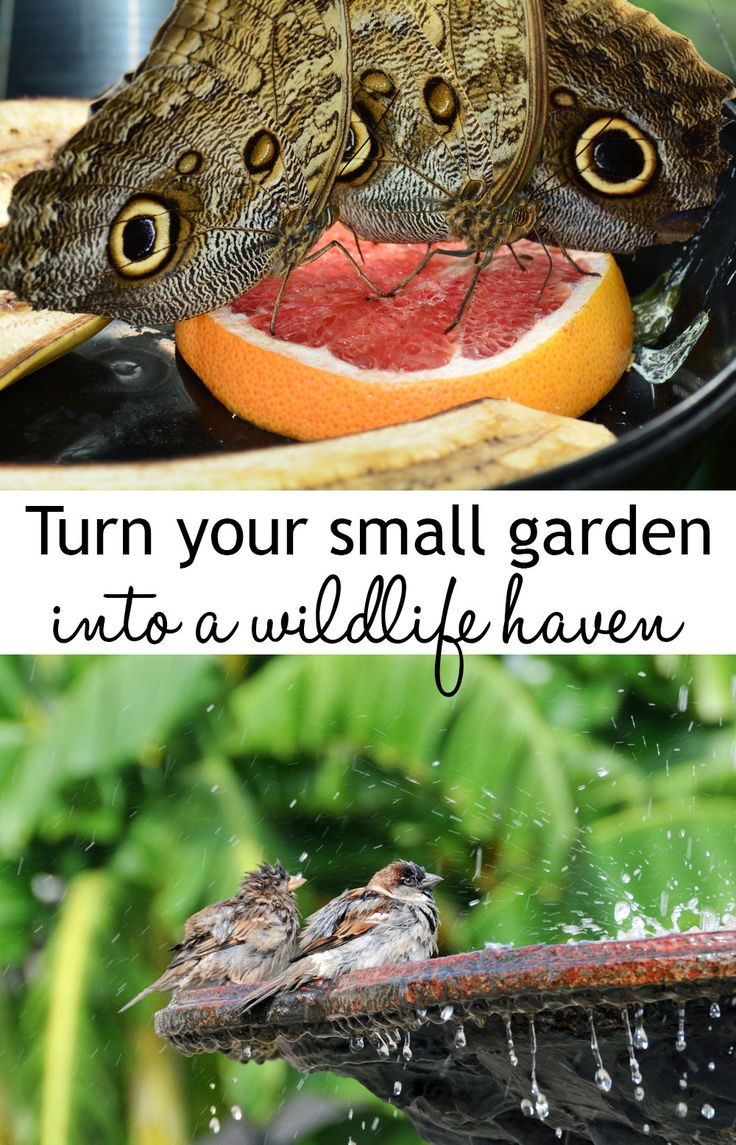 Small gardens and urban gardens can still be havens for wildlife!