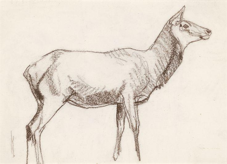Bob Kuhn   Cow Elk   conte on paper