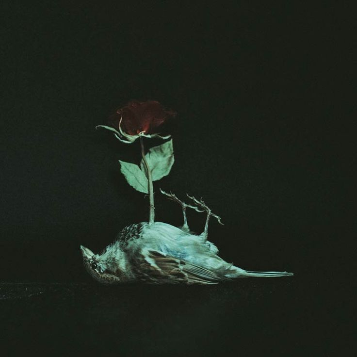 A selection of the dark and surreal photographs from the portfolio of Laura Makabresku, a Polish photographer who portrays her fears in what she defined hers