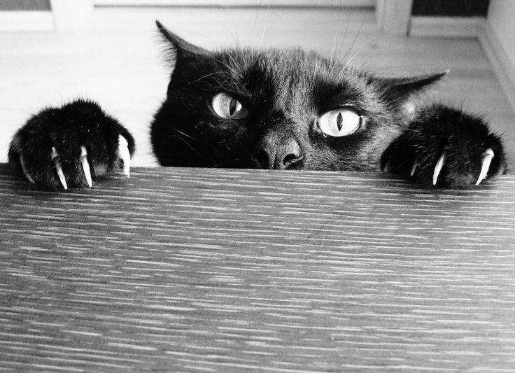 les 25 meilleures idées de la catégorie griffes de chat sur