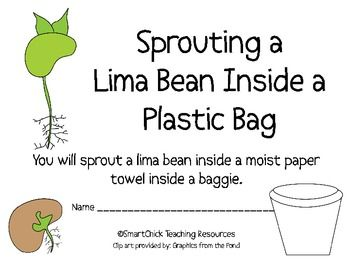 Complete Lima Bean Plant Packet!  A HUGE Set of Hands-On A