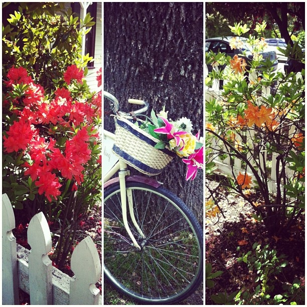 Beautiful spring colours in Arrowtown #Queenstown #Flowers #New Zealand
