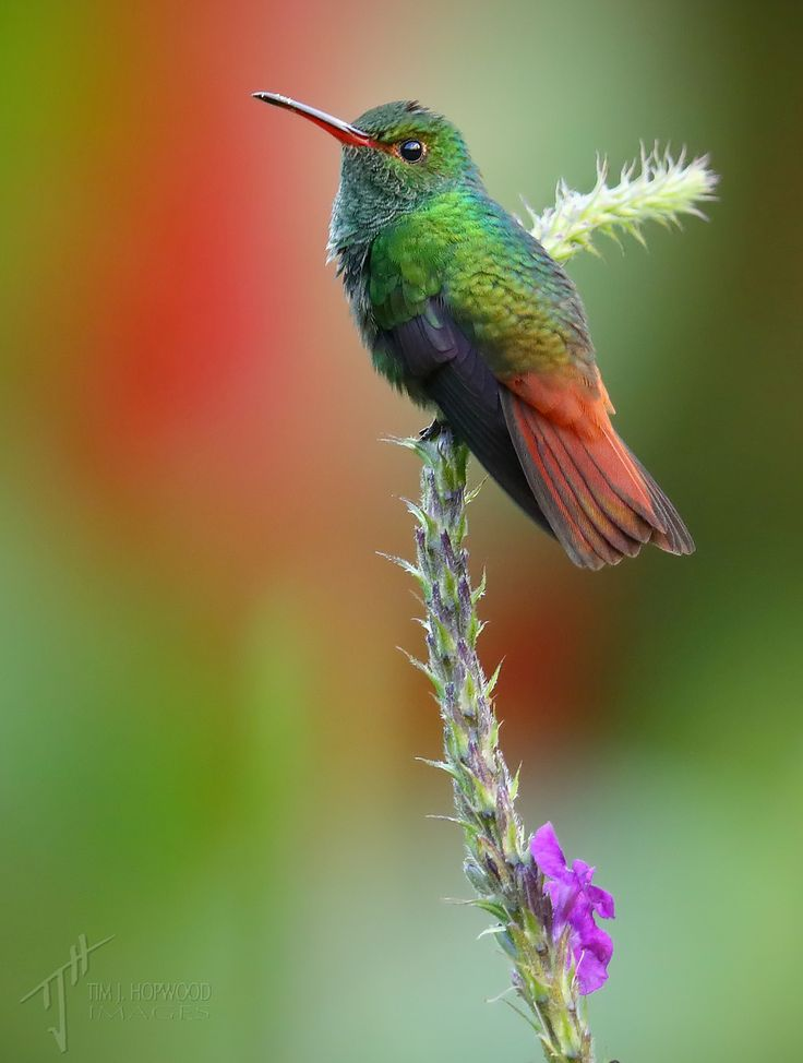 Best Hummingbirds Images On Pinterest Html Nature And - Photographer captures amazing close up photos of hummingbirds iridescent feathers