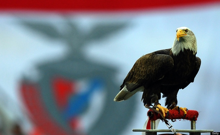 Animal Photos Of The Week  rom Getty: Benfica's North American bald eagle mascot stands on it's perch before the UEFA Champions League football match between Benfica and Chelsea at Estadio da Luz in Lisbon, on March 27, 2012. Chelsea won 1-0. AFP PHOTO/PAUL ELLIS