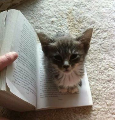 The perfect bookmark... except it'll never stay put when you're not reading, and won't let you turn the page if you are.