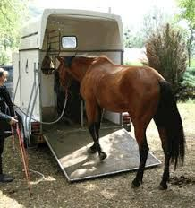 Belle remorque pour cheval !  #remorque #cheval pour plus d'infos : http://remorques-discount.com/fr/