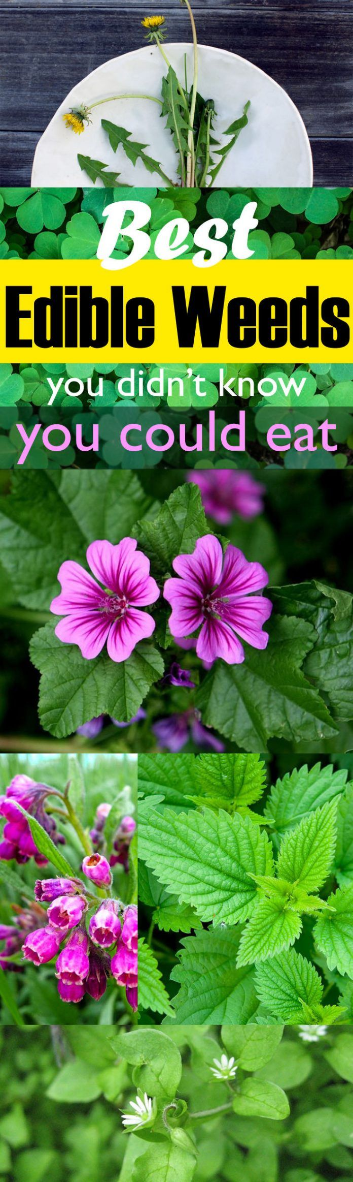 Best Edible Weeds You Didn't Know You Could Eat