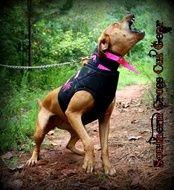 DIrty Dawg Strike Hog Dog Vest- $65  PINK Edition   www.SouthernCrossCutGear.com