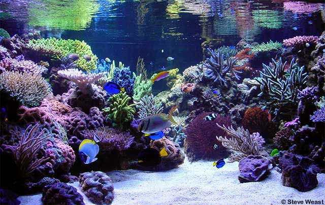 aquascaping saltwater - Google Search