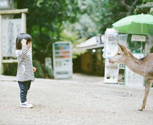 fluoric:  Yui met a Sika deer (by Masato Tsukamoto)