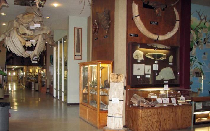 Sierra College Natural History Museum is a Great Way to Spend the Day http://www.theloomisnews.com/sites/default/files/styles/photo_gallery_big/public/4lnmcolumn.jpg?itok=-1nIAbNU
