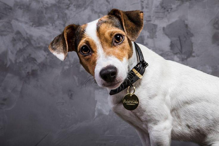 Thank dog it's friday 🖤  www.rudelliebe.de    #hund #frenchbulldog #dog #dogs #halsband #dogsofinstagram #goldenretriever #instadog #dogstagram #dogoftheday #dogs_of_instagram #retriever #labrador #puppy #instapets #puppy #bulldog #dalmatiner #hundehalsband #labrador #labradoodle #jackrussel #mops #pets_of_instagram #irishsetter #australianshepherd #beagle #französischebulldogge #dalmatiner #dackel #frenchbulldog