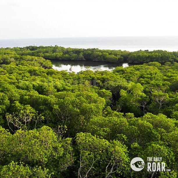 Apo Reef: A Hidden Gem in Mindoro #aporeef #mindoro #thephilippines #visitthephilippines #hiddengem