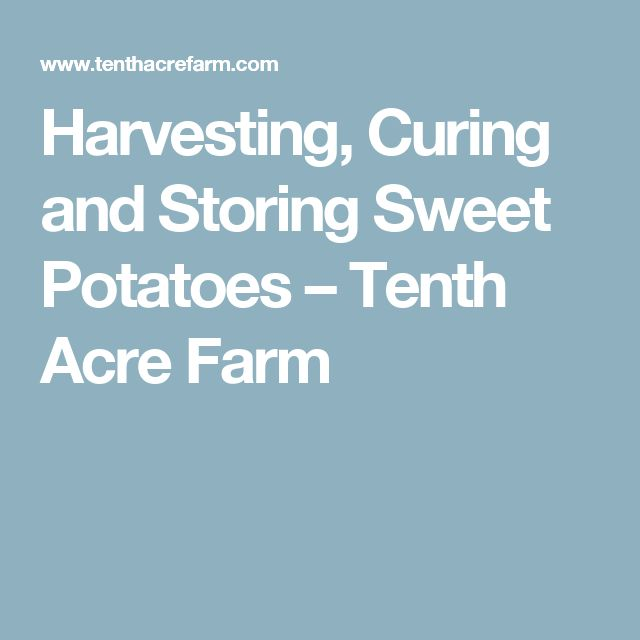 Harvesting, Curing and Storing Sweet Potatoes – Tenth Acre Farm