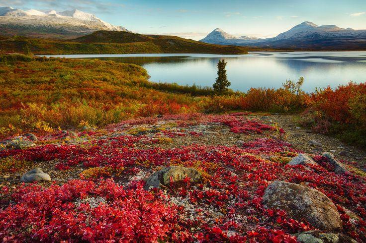 Photograph Autumn Tundra by Brian Truono on 500px