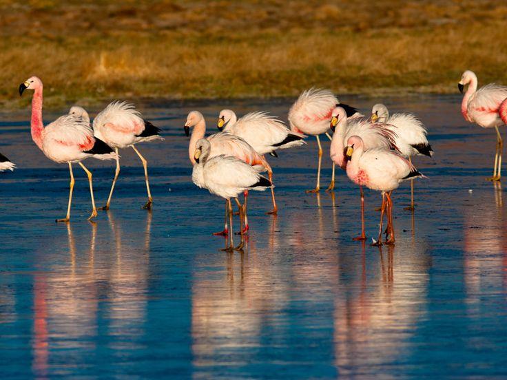 Embora o Deserto do Atacama tenha atrativos para qualquer época do ano, quem quer viajar especialmente para contemplar os flamingos, deve optar pelo mês de janeiro.