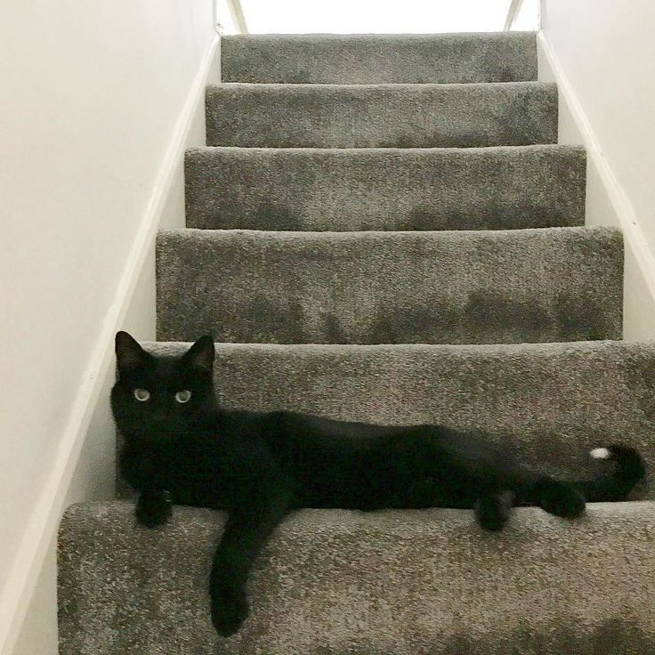 You shall not pass... unless you have dreamies... then I may consider it