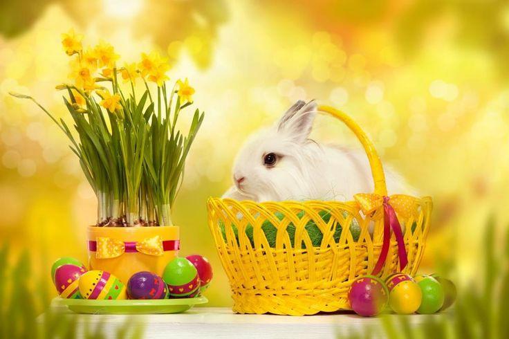 200cm150cm easter photography backdrops Egg dishes basket photo frame Easter Sunday ZJ