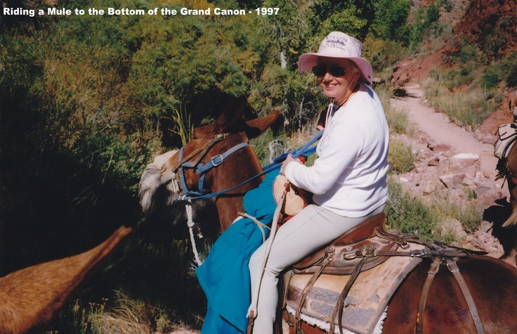 Riding a Mule to the bottom of the Grand Canyon#greatwalker