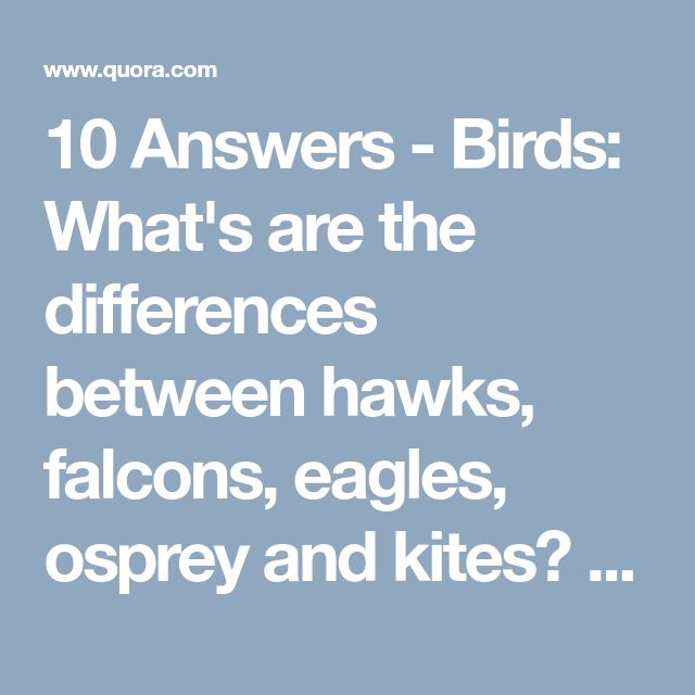 10 Answers - Birds: What's are the differences between hawks, falcons, eagles, osprey and kites? - Quora