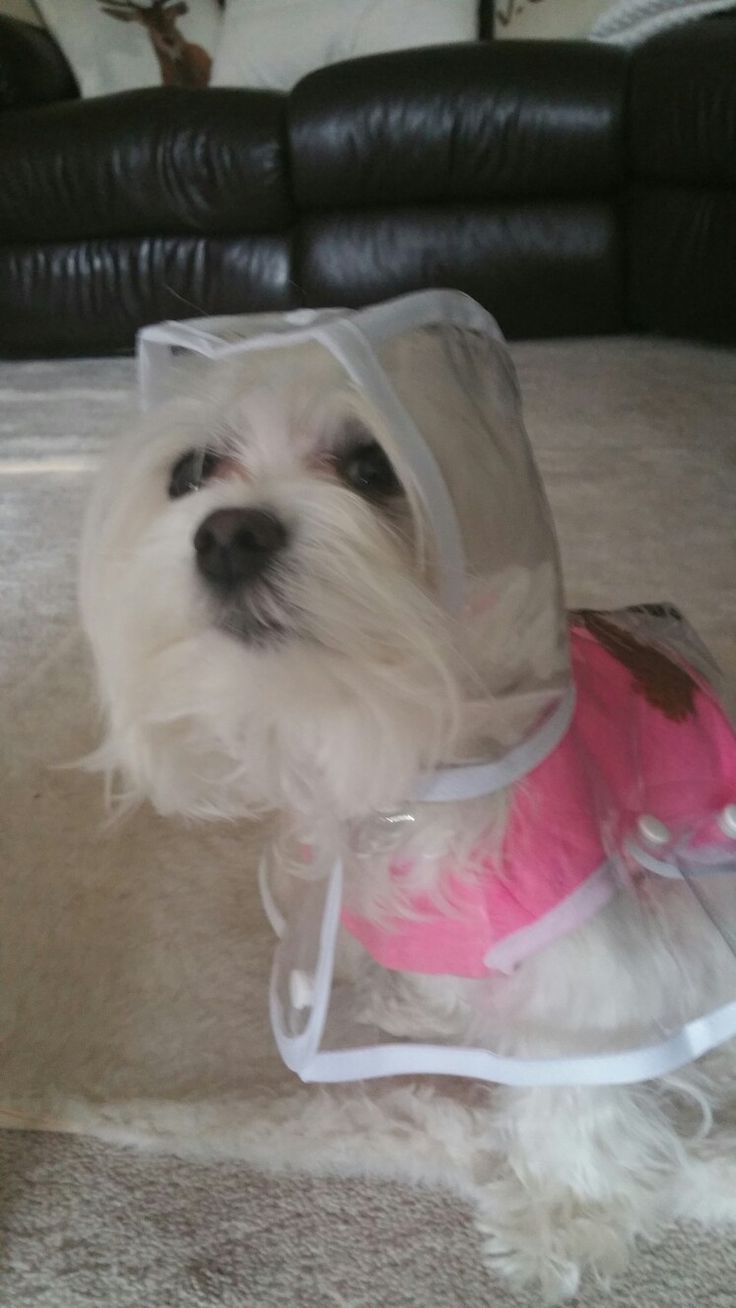 Rain coat for sale in www.pixiesposhpets.co.uk or pixie's posh pets boutique fb