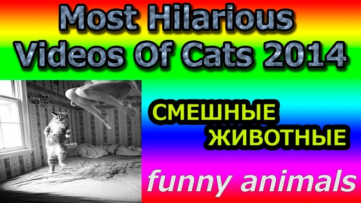 Most Hilarious Videos Of Cats 2014 FANNY / СМЕШНЫЕ КОШКИ Most Hilarious Videos Of Cats 2014 FANNY / СМЕШНЫЕ КОШКИ:  new funny cat funny cat videos funny cat videos compilation