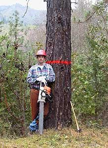 Cutting a Tree With a Chainsaw - Safety Is a Tree Felling Must from About.com>Forestry. Has links out to resources like chainsaw chaps.