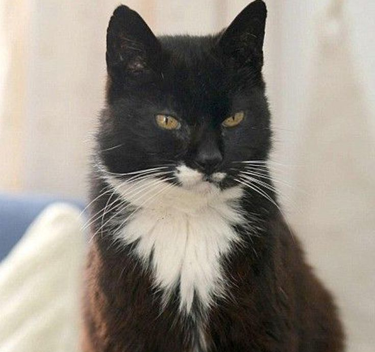 The Oldest Cat Ever!