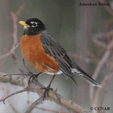 Robins can find a worm so easily, and I can't see them at all.
