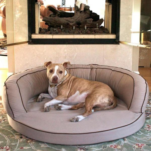 L A Dog Company Ortho Bolster Companion Pedic Luxury Dog Bed Orthopedic Dog Bed Orthopedic Pet Bed Dog Bed Luxury