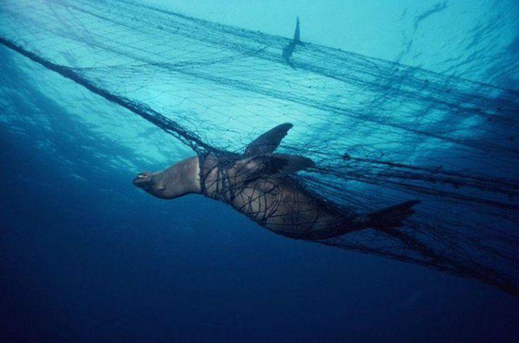 Foto mostra triste realidade da captura de animais marinhos pela pesca