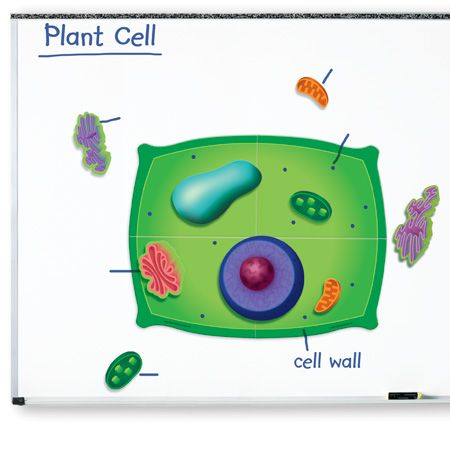 Giant Plant Cell