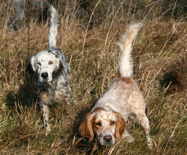 57 best Bird dogs imag...