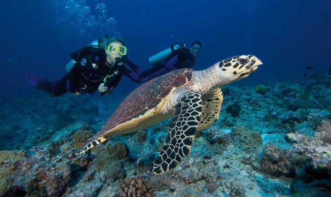 Scuba Diving with Turtles in Coffs Harbour! Kickstart your adventure now: http://www.backpackerdeals.com/australia/coffs-Harbour