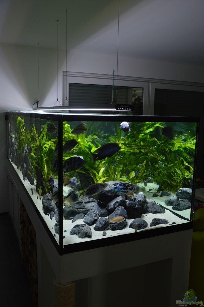 Die besten 25+ Malawi aquarium Ideen auf Pinterest Cichlid - deko fur aquarium selber machen