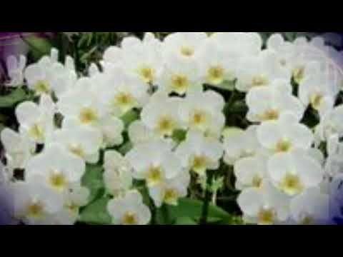 Орхидея будет радовать вас цветами при таком уходе #mosshow - YouTube