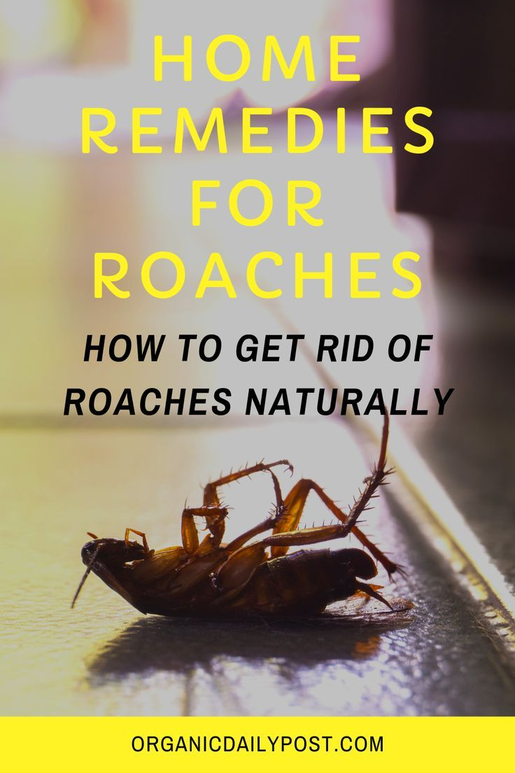 Home Remedies For Roaches How To Get Rid Of Roaches Naturally Herbal Remedies Herbal Cure Health Knowledge
