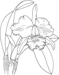 Orquídea de Pascua Cattleya Dibujo para colorear