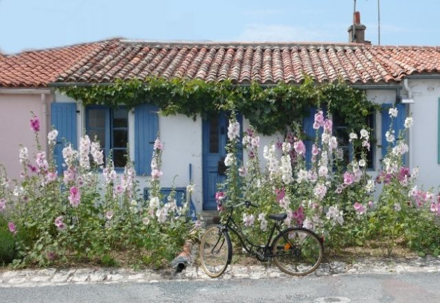 L'île d'Aix avec ses maisons typiques et ses roses trémières se visite très facilement à vélo - Un vrai moment agréable à passer en famille | Pays Rochefort-Océan | Charente-Maritime Tourisme #charentemaritime | #ile | #iledaix | #bicyclette