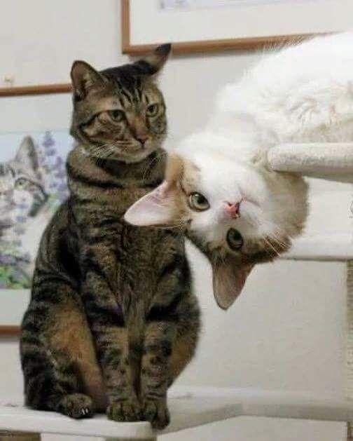 Funny Cat's Photo Bomb