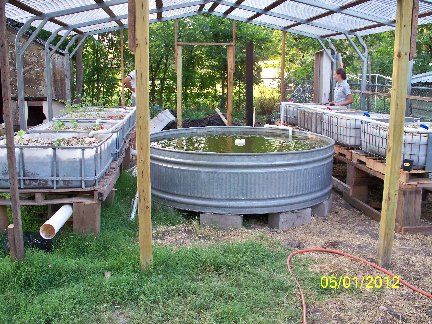 backyard aquaponics set up